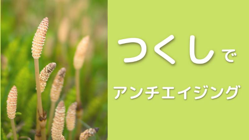 春の野草、土筆(つくし)が群生している様子