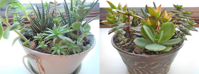窓辺に置かれた多肉植物の鉢植え