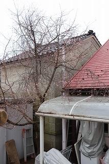 f:id:baba_rumiko:20200218154405j:plain