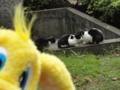 [20101121ハンバーグ部オフ][猫][パルちゃん通信]