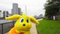 [パルちゃん通信][20110718月島もんじゃ焼き][橋の写真][東京スカイツリー]中央大橋
