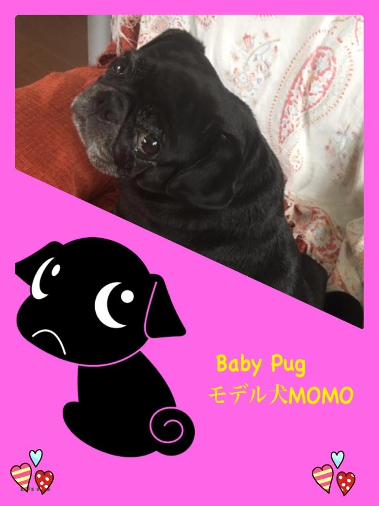 f:id:babypug:20181224163859j:plain