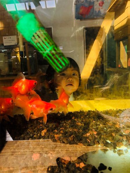 金魚越しの朝陽チャン