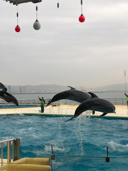 イルカさん、クジラさんのジャンプにこの顔!