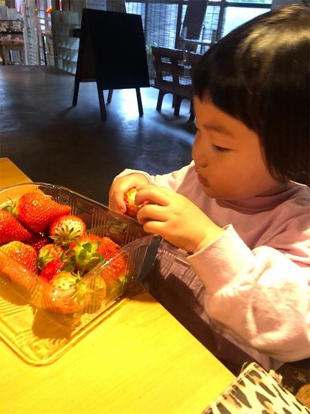 子供たちは待ちきれずに  自分で摘んだ苺をパクリ!