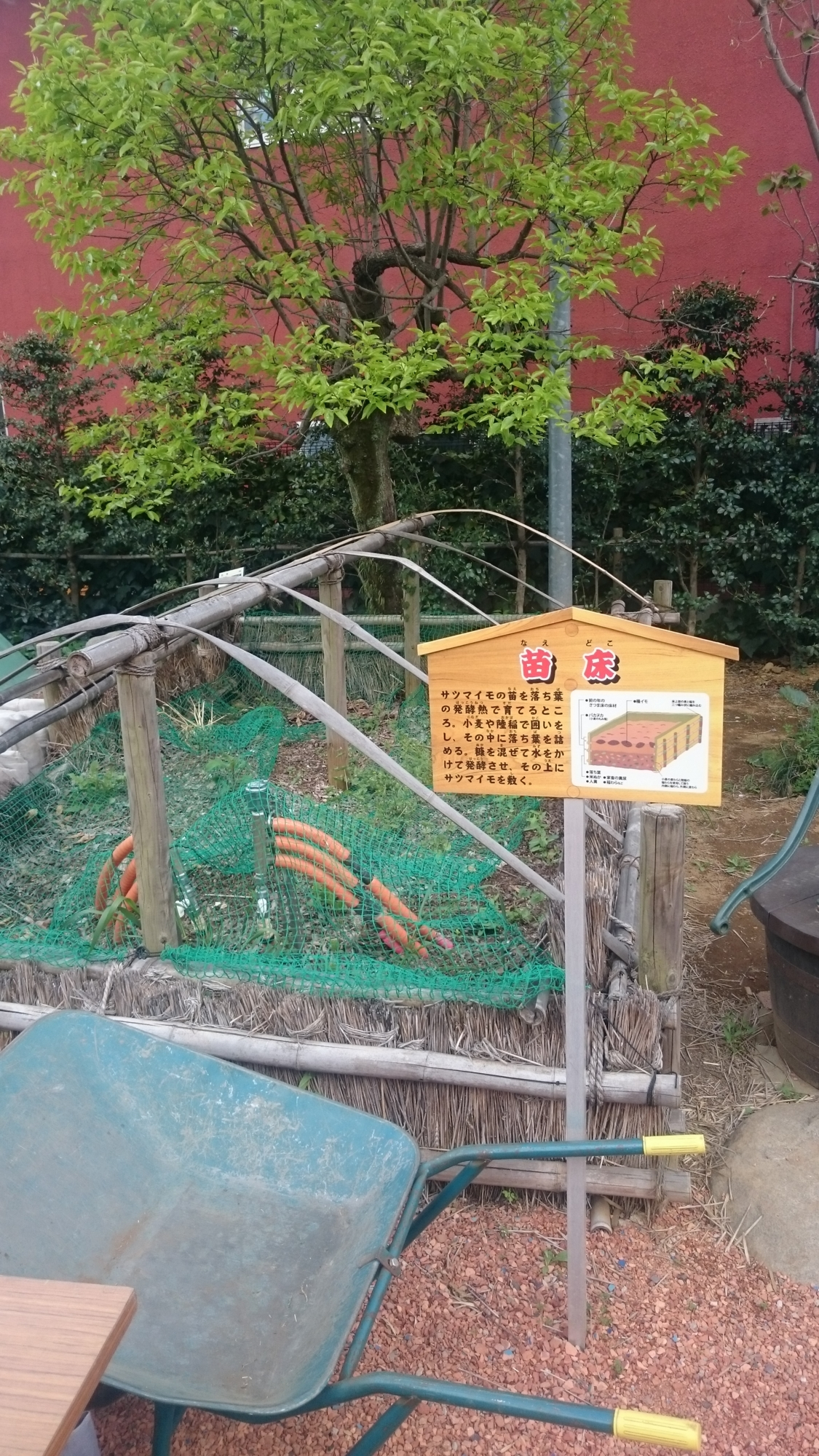三富今昔村語りべ館 サツマイモの苗床