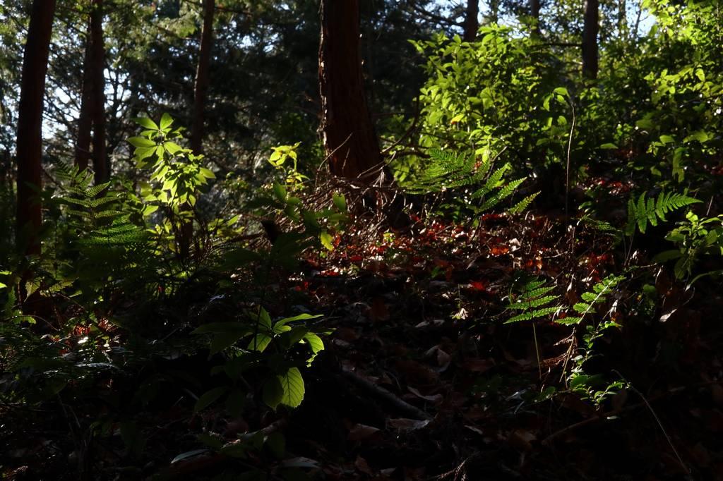 樹林帯に入って右折し登っていきます