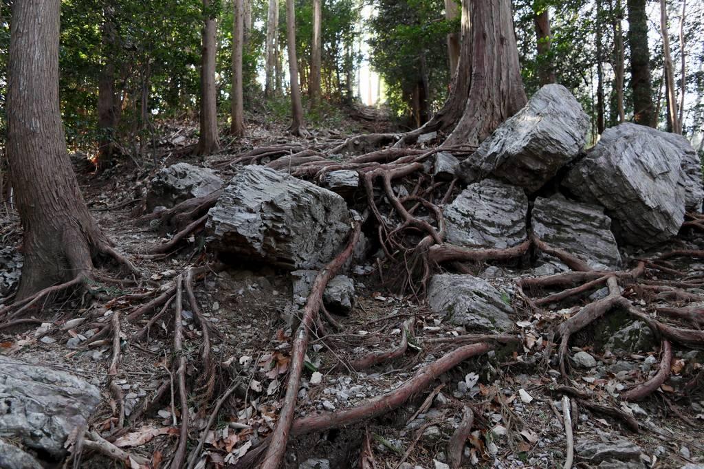 木の根っ子エリアも特に難しくはありません