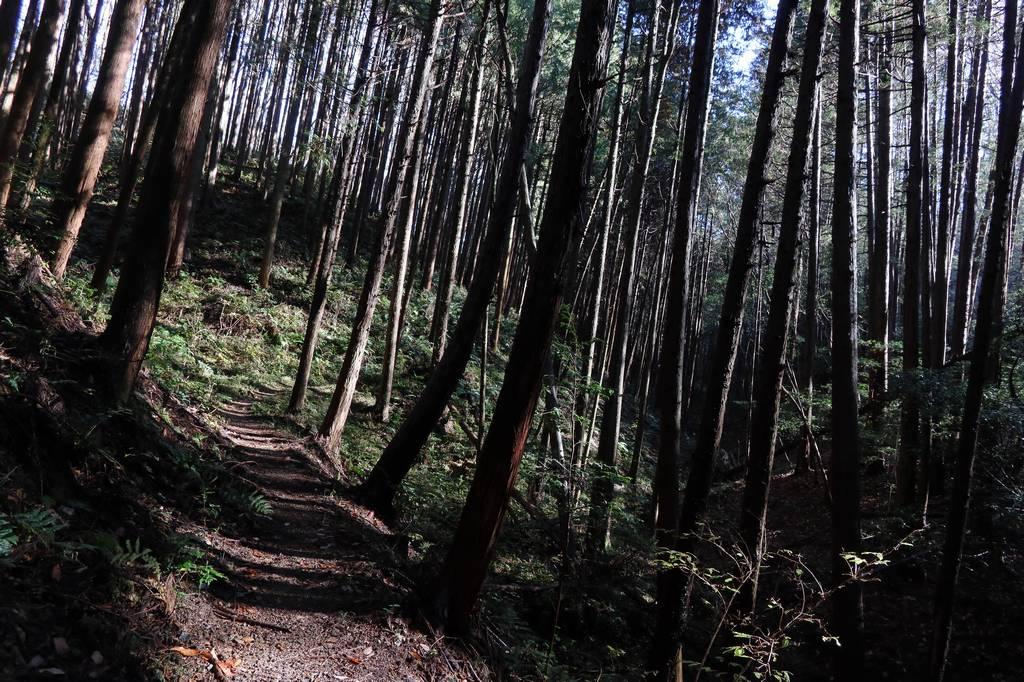 このコースは道中はほとんど樹林帯です