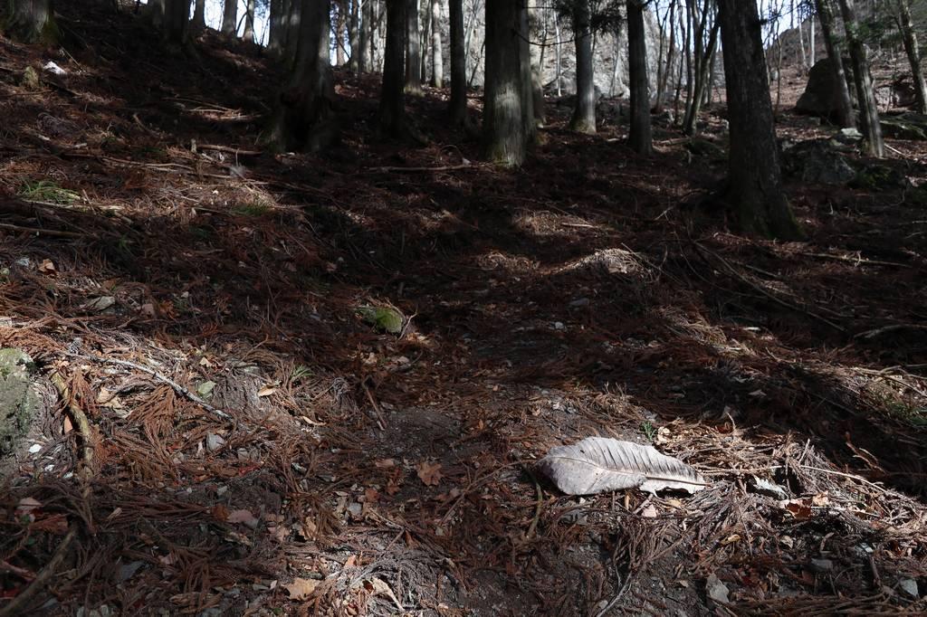 引き続き樹林帯の中を進んでいきます