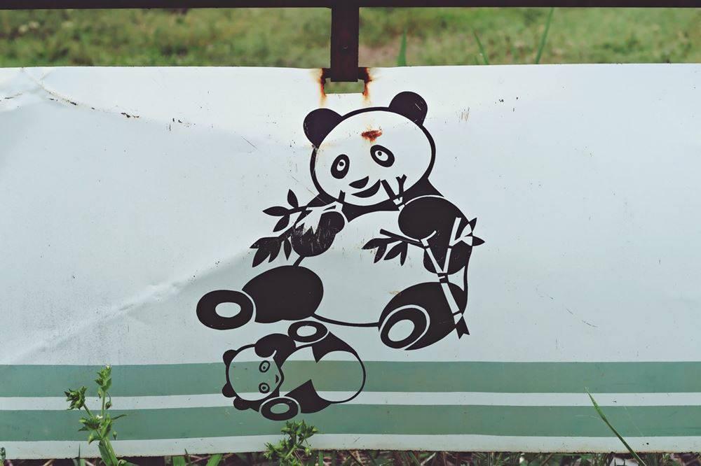 可愛くないパンダ