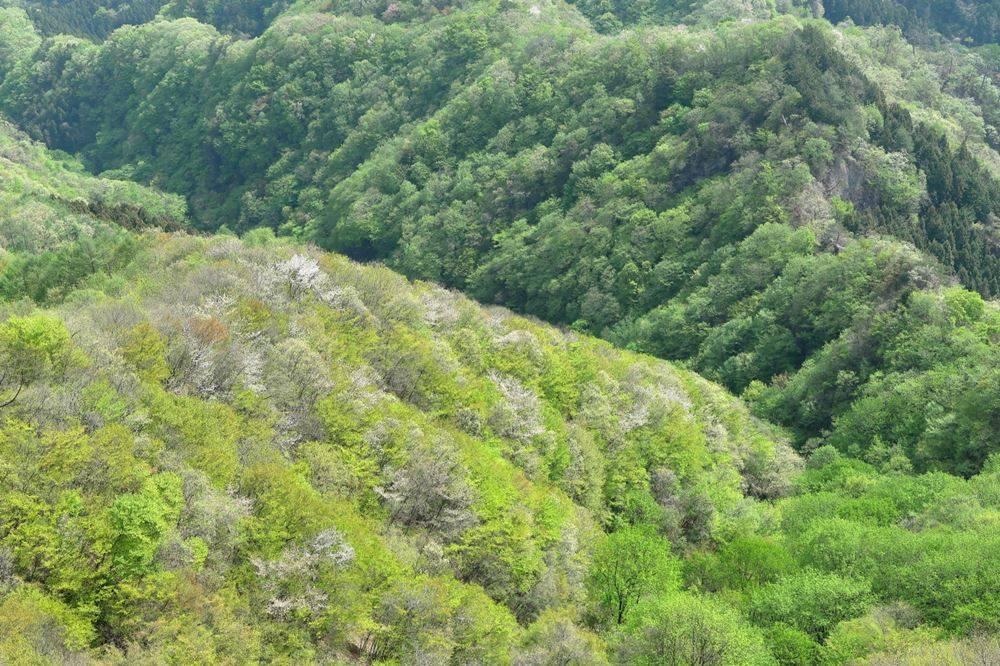 新緑に染まる山々