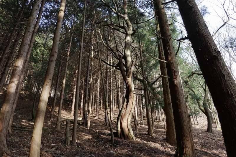 稜線に出る前は樹林帯の中を歩きます。