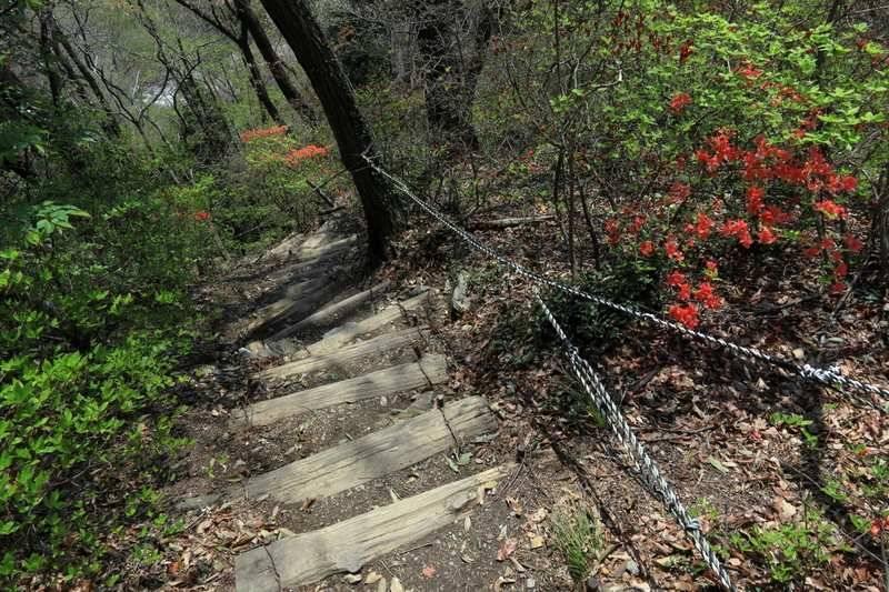 南コースで下山。急坂が続くので慎重に。道中にベンチあり。