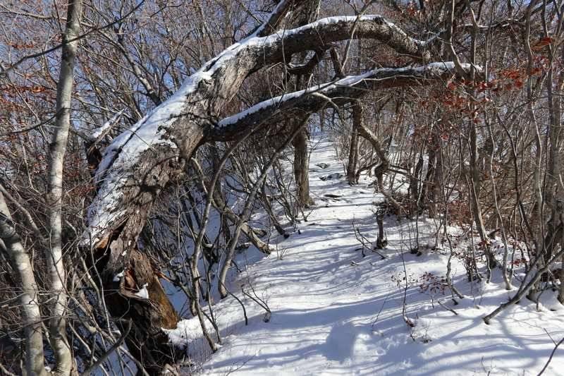 稜線歩きは特に危険個所も無く気持ちよく歩けます。