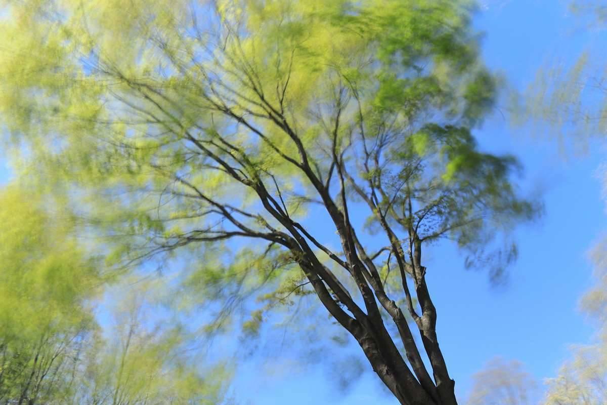 春一番の強風をスローシャッターで表現。(シャッタースピード8秒)