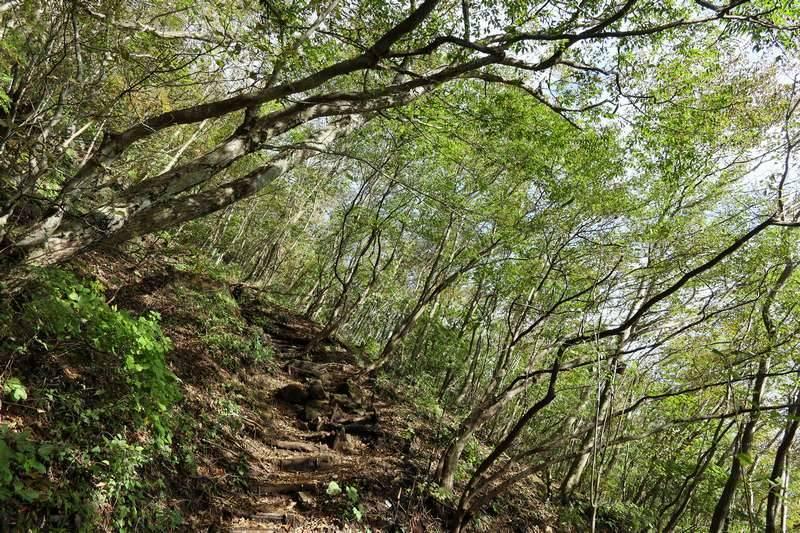 木々の中、急登を登っていきます。