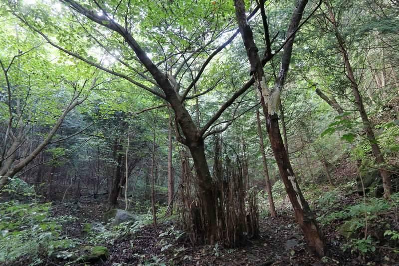 樹林帯の中を黙々歩く、よくある低山パターンです。