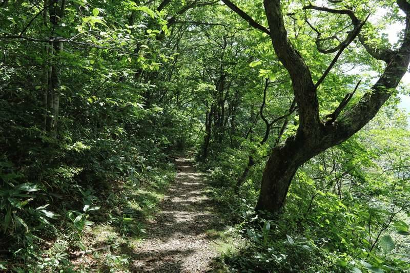 小さな沢を渡り緑の中を歩きます。