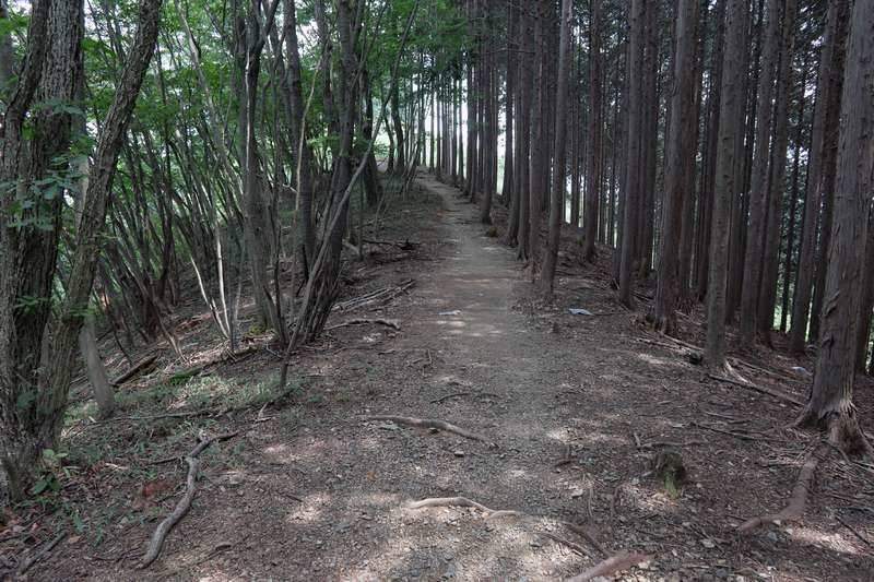 腹を満たしたところで下山開始。滝ノ平尾根コースで下って行きます。
