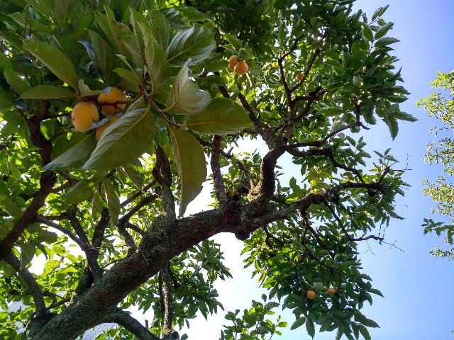 f:id:bakedfruits:20171027154454j:image