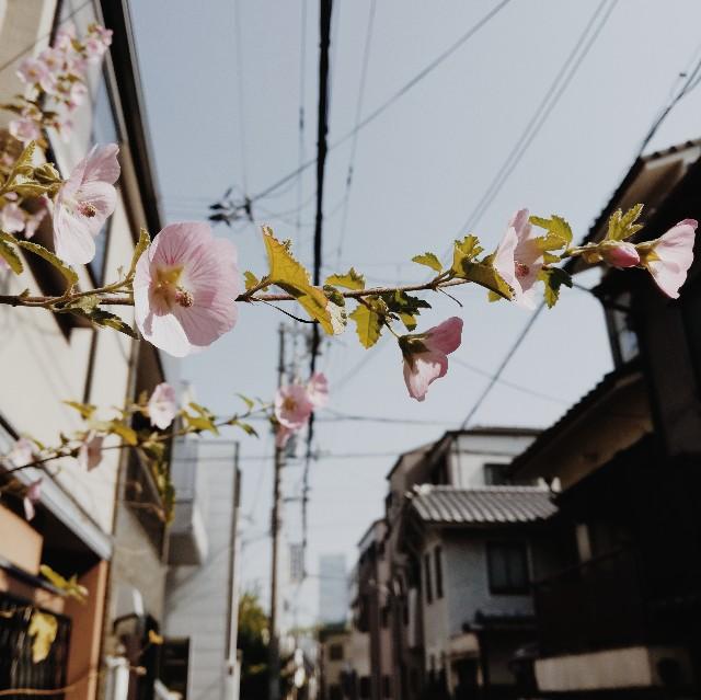 f:id:baku305:20180420093804j:image