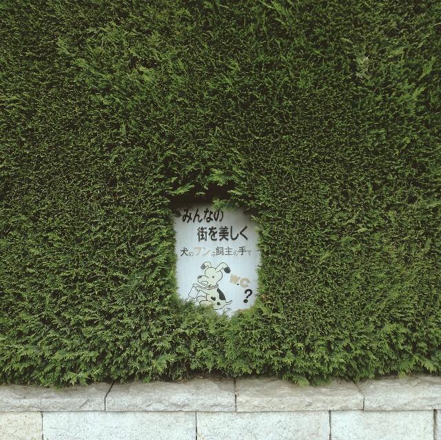 f:id:baku305:20180515111234j:image