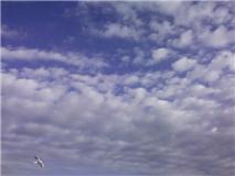 f:id:bakuchan:20110105122935j:image