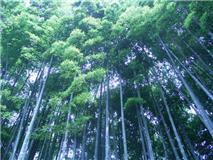 f:id:bakuchan:20110624114749j:image