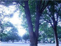 f:id:bakuchan:20110624122921j:image