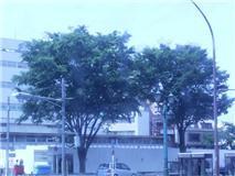 f:id:bakuchan:20110624122923j:image