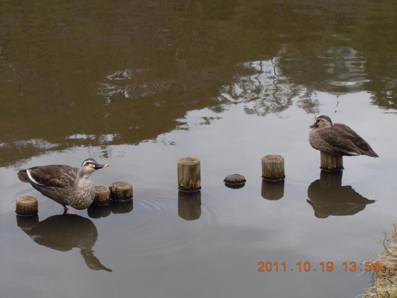 f:id:balduina:20111019135432j:image