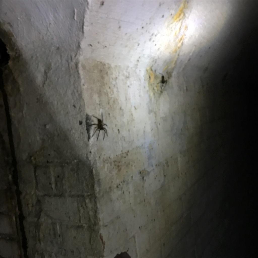 f:id:bamiiiii:20170417230717j:image