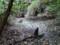 干上がったカクレ池