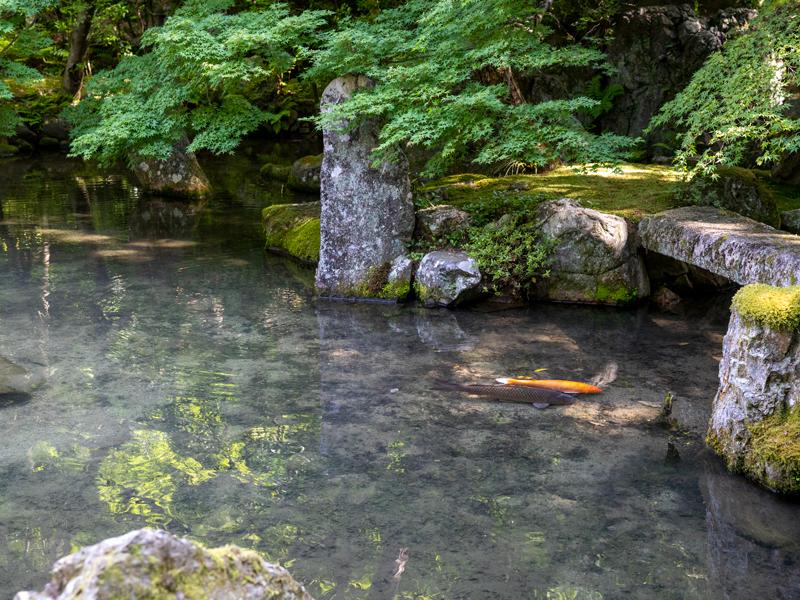 蓮華寺の池泉