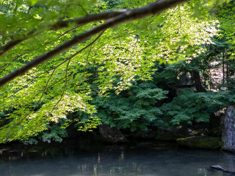 蓮華寺の新緑