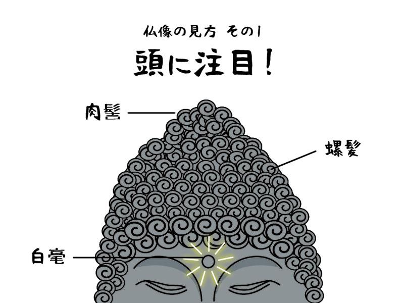 仏像の見方その1 頭に注目!