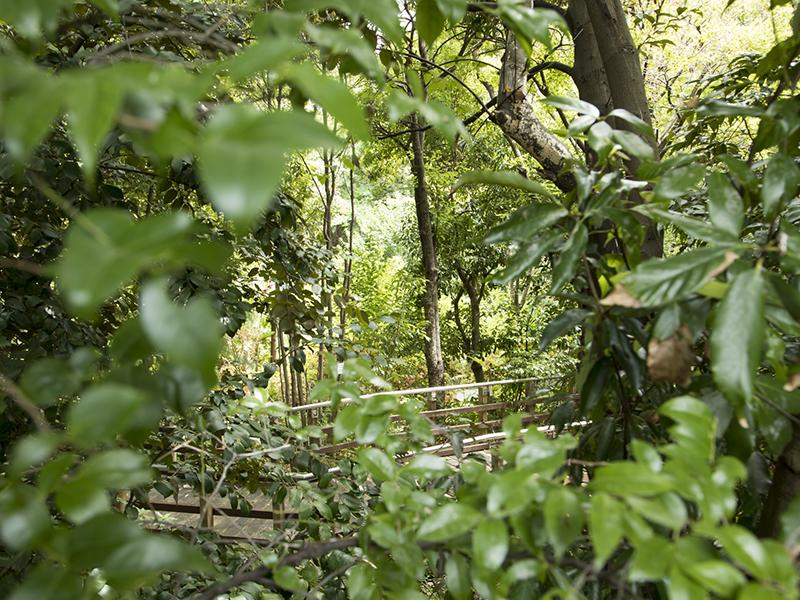 いのちの森