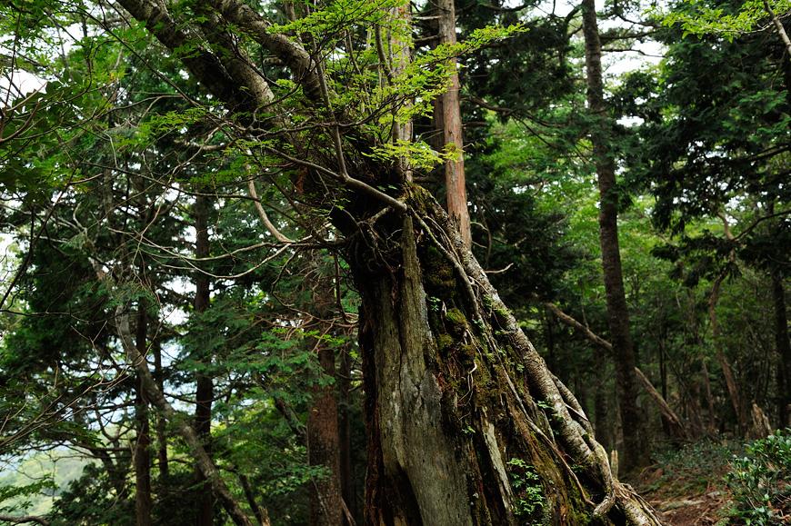 f:id:banriman:20120923200016j:image