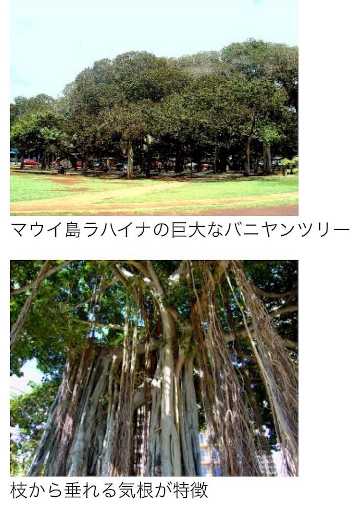 f:id:banyan-ballet:20160804113140j:image