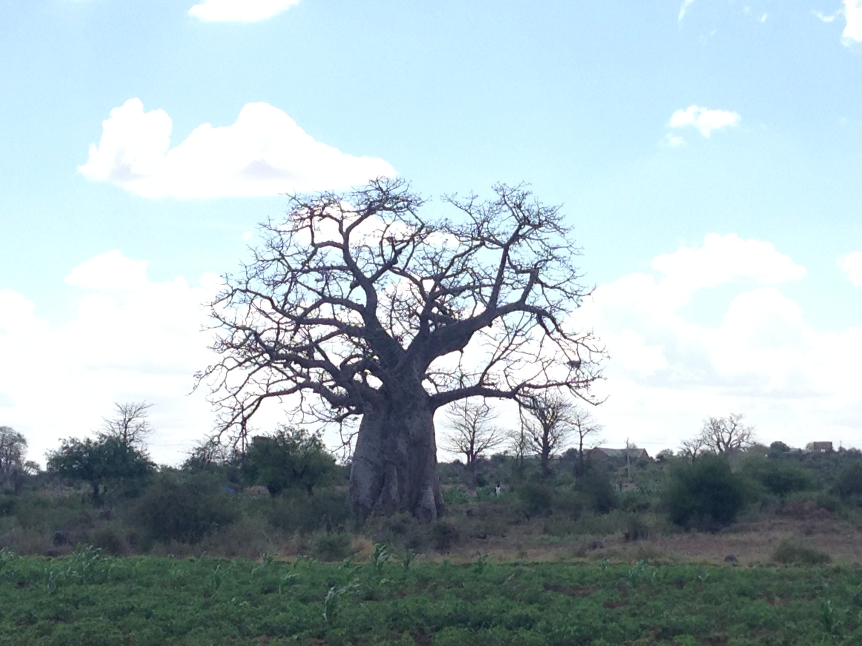 f:id:baobab-no-ki:20160516200719j:plain