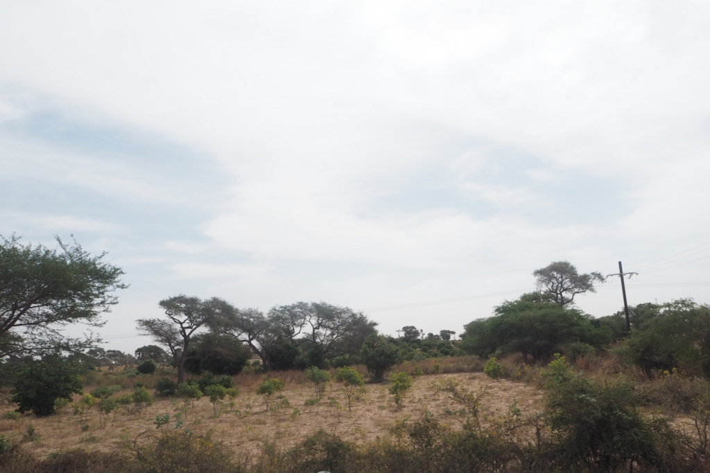 f:id:baobab-no-ki:20161230065057j:plain