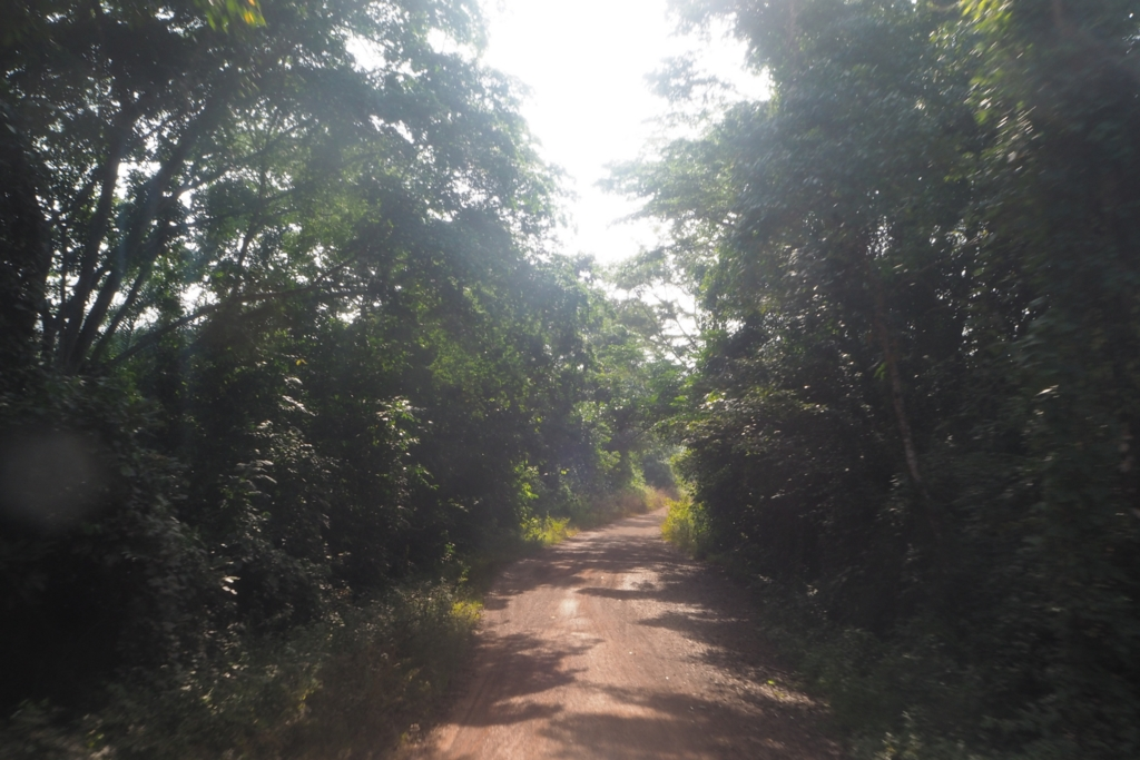 f:id:baobab-no-ki:20170113211325j:plain
