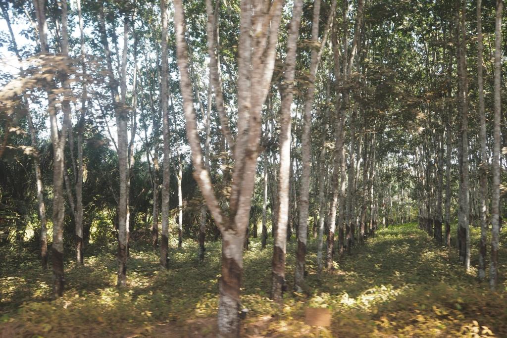 f:id:baobab-no-ki:20170116223950j:plain