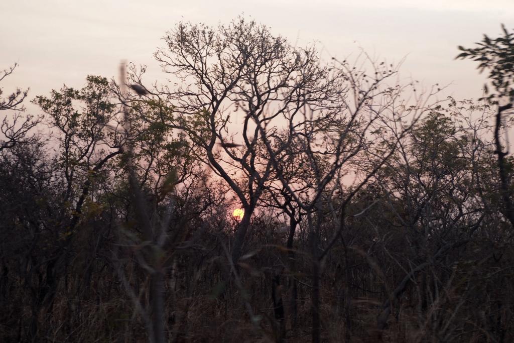 f:id:baobab-no-ki:20170118183158j:plain