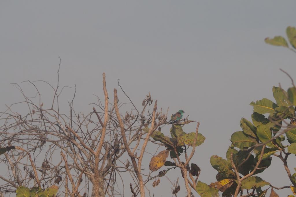 f:id:baobab-no-ki:20170118184025j:plain