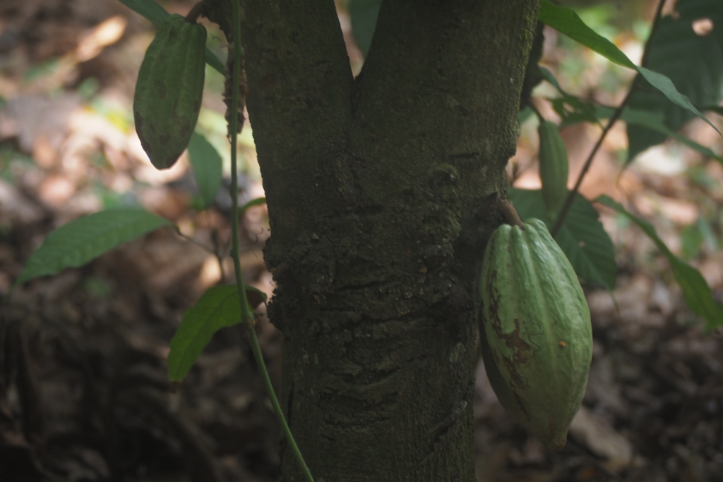 f:id:baobab-no-ki:20170119003359j:plain