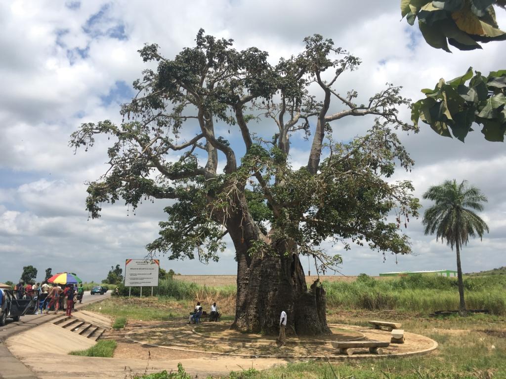 f:id:baobab-no-ki:20170313221125j:plain