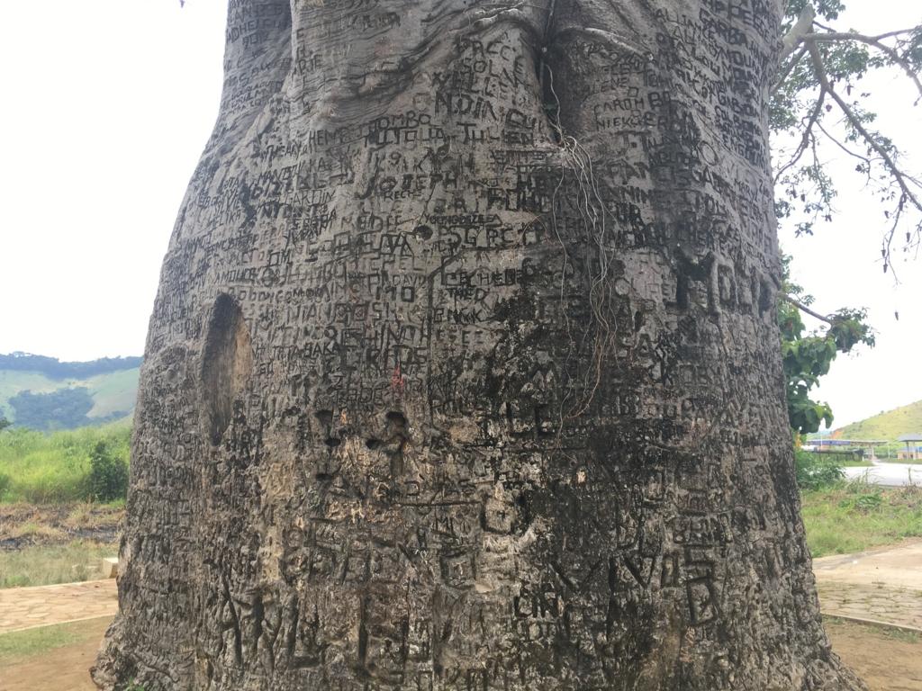 f:id:baobab-no-ki:20170313221540j:plain