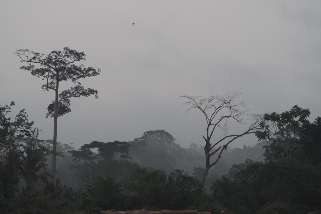 f:id:baobab-no-ki:20170313221909j:plain